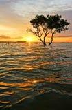 摘要,令人惊讶的环境美化,树,太阳,波纹 免版税库存图片