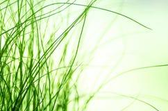 摘要blured绿草背景 自然纹理 免版税库存图片