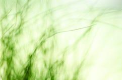 摘要blured绿草背景 自然纹理 免版税库存照片