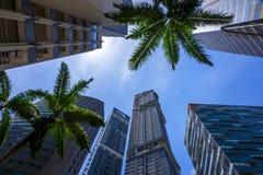 摩天大楼和棕榈树 库存图片