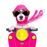 摩托车歌剧女主角狗在夏天 免版税库存图片