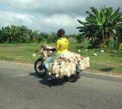 摩托车的人有鸡的象牙海岸,非洲 库存照片