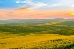 摩拉维亚小山和油菜籽领域 免版税库存图片
