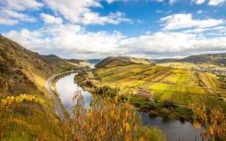 摩泽尔秋天金黄葡萄园使从卡尔蒙Klettersteig的看法环境美化 图库摄影