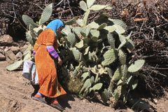 摩洛哥妇女在阿特拉斯山脉 库存照片
