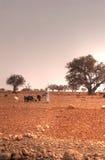 摩洛哥牧场地 免版税库存照片