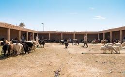 摩洛哥贸易商在绵羊市场上在摩洛哥 库存图片