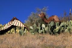 摩洛哥骆驼和巴巴里人帐篷 免版税图库摄影