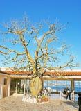 摩纳哥的Jardin Exotique门厅  图库摄影