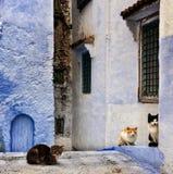 从摩洛哥丝毫猫的街道 免版税库存图片