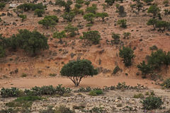 摩洛哥横向 沙漠 库存照片