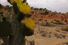 摩洛哥横向 沙漠 免版税库存照片