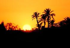 摩洛哥,马拉喀什,棕榈树剪影在日落的 图库摄影