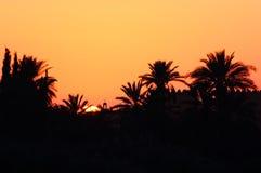 摩洛哥,马拉喀什,棕榈树剪影在日落的 免版税图库摄影