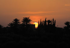 摩洛哥,马拉喀什,棕榈树剪影在日落的 库存图片
