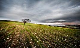 撒丁岛风景 免版税图库摄影