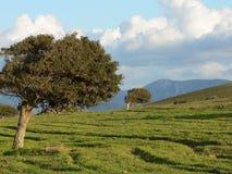撒丁岛 贡内萨 免版税图库摄影