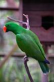 撒哈拉大沙漠下的非洲鹦鹉 免版税库存照片