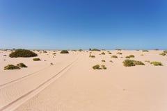 撒哈拉大沙漠在西撒哈拉 库存照片