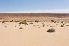 撒哈拉大沙漠在西撒哈拉 免版税库存图片