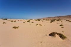 撒哈拉大沙漠在西撒哈拉 库存图片