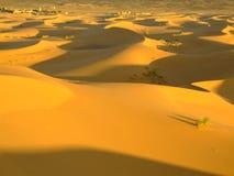 撒哈拉大沙漠日出 库存图片