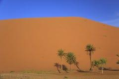 撒哈拉大沙漠沙丘 免版税库存照片