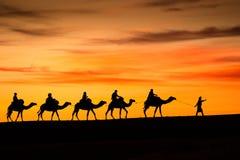 从撒哈拉大沙漠的骆驼 库存图片