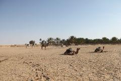 撒哈拉大沙漠突尼斯, Ghlissia吉比利 免版税库存照片