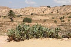 撒哈拉大沙漠突尼斯, Matmata是巴巴里人地区在南突尼斯 免版税库存图片