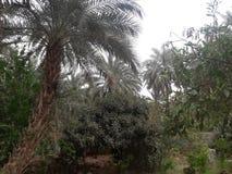 撒哈拉大沙漠palmes 免版税图库摄影
