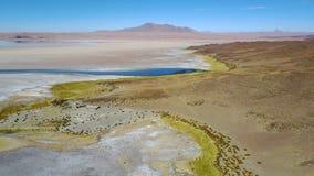 撒拉族在阿塔卡马沙漠的de塔拉,智利 图库摄影