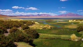 撒拉族de塔拉,阿塔卡马沙漠,智利 免版税库存照片