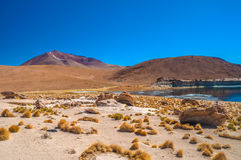 撒拉族de Uyuni 免版税图库摄影