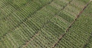 播种与从上面被观看的不尽的麦田 股票视频