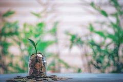 播种在硬币-成长的投资想法 库存图片