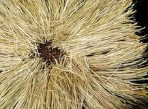 播种安排在藤条篮子的棕色秸杆堆在黑色是 免版税库存照片