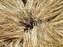 播种安排在藤条篮子的棕色秸杆堆在黑色是 免版税库存图片