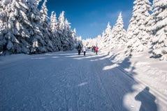 播种有横穿全国的滑雪者、远足者、结冰的树和蓝天的乡下公路在冬天Jeseniky山轰鸣声Praded喂 免版税库存照片