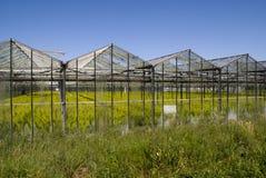 播种温室 图库摄影