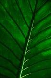 播种的热带叶子 库存照片