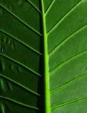 播种的热带叶子 免版税库存图片