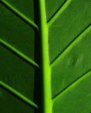 播种的热带叶子 免版税图库摄影