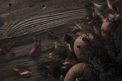 播种被扩大的火光灵活性光晕月光奥秘影子蜘蛛网的大明亮的铸件古怪 免版税库存图片