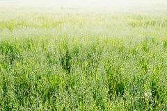 播种谷物 免版税图库摄影