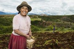 播种领域的秘鲁妇女在Maras附近,在秘鲁 免版税库存照片