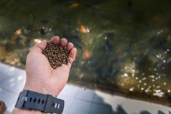 播种饵料的鱼农夫在池塘 免版税库存图片