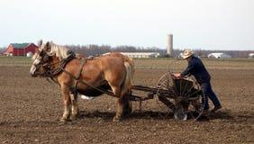 播种他的领域的一位老门诺派中的严紧派的农夫 免版税库存照片
