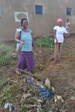 操作干净的村庄 库存图片