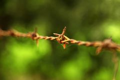 操刀与在它后的农田的铁丝网 免版税图库摄影